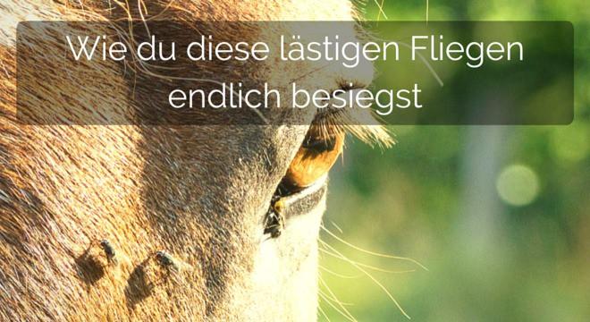 Fliegenabwehr für Pferde: Damit wirst du die lästigen Biester endlich los