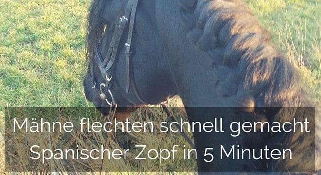Spanischer Zopf: Wie du die Mähne deines Pferdes bändigst!