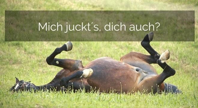 Sommerekzem bei Pferden und dessen Behandlungsmöglichkeiten