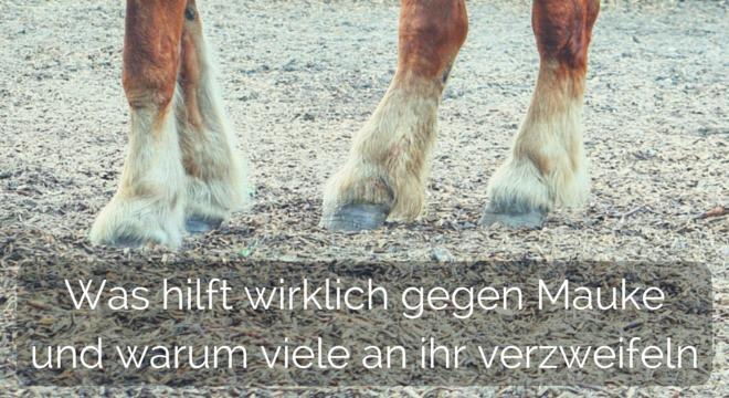 Mauke bei Pferden – von innen nach außen!