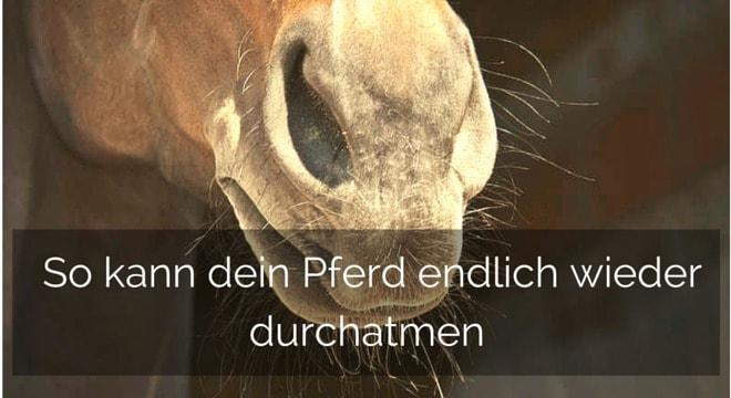 Schwarzkümmelöl für Pferde: Draufbeißen & Durchatmen