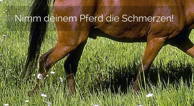 Spat beim Pferd – Nimm deinem Pferd die Schmerzen!