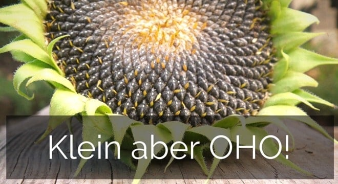 Sonnenblumenkerne fürs Pferd – Klein aber OHO!