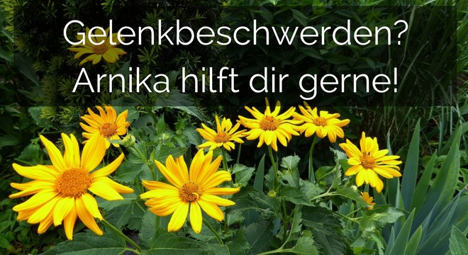 Arnika für Pferde – Schmerzstiller & Entzündungsblocker!