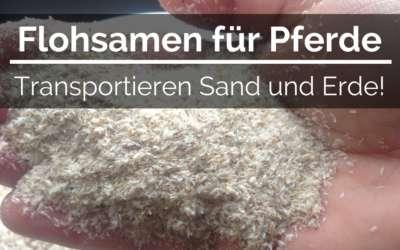 Flohsamen für Pferde, transportieren Sand und Erde!