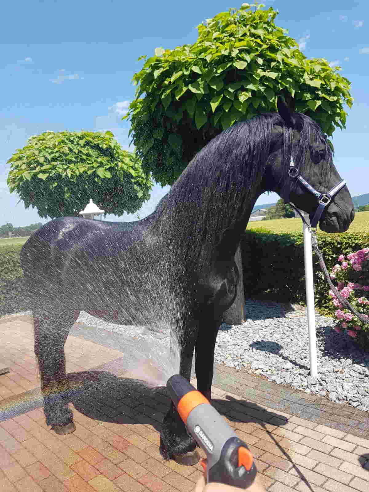 Pferd abkühlen