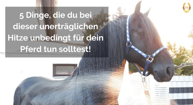 Pferd Hitze