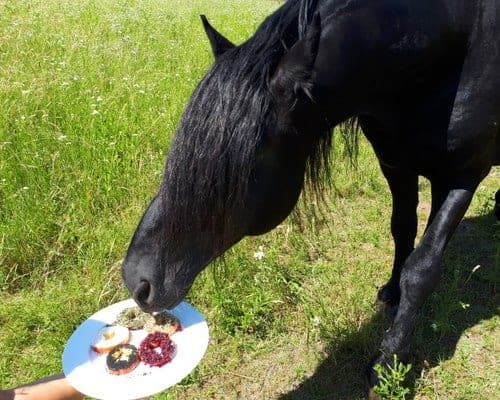 Pferdeleckerlies selber machen