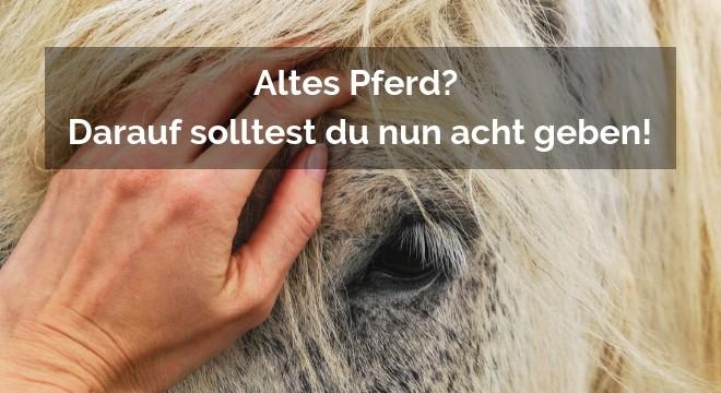 Altes Pferd
