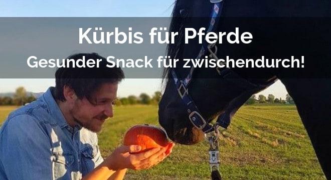 kürbis für pferde