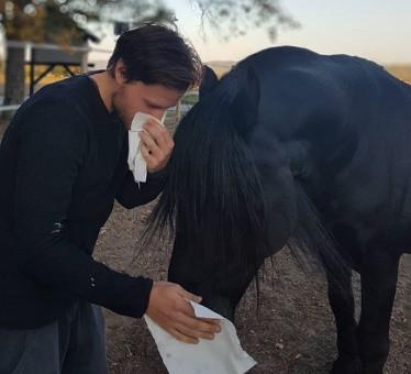 fellwechsel pferd