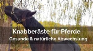 Knabberäste für Pferde