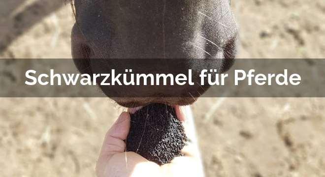 Schwarzkümmel für Pferde