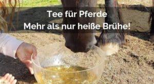Tee für Pferde