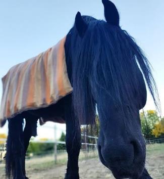 Pferd eindecken