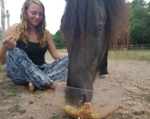 hopfen für pferde