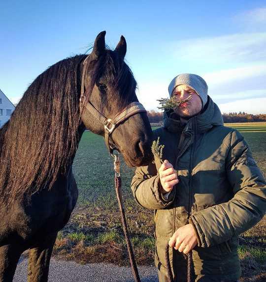 Hustenkräuter für Pferde