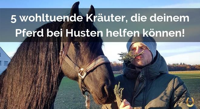 Gemeinsame 5 wohltuende und effektive Hustenkäuter für Pferde! &AE_18