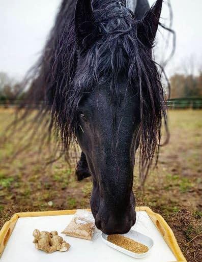 ingwer für pferde