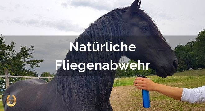 fliegenschutz für pferde