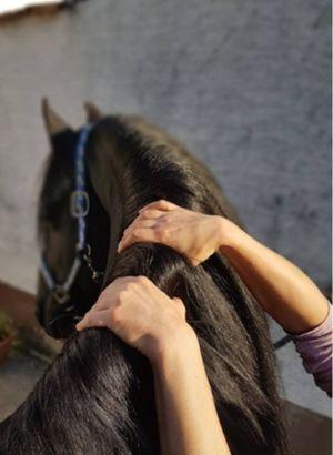 wellness für pferde