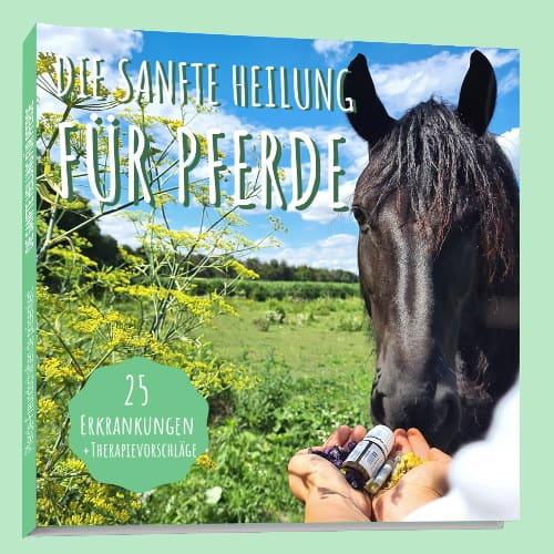 Sanfte Heilung für Pferde
